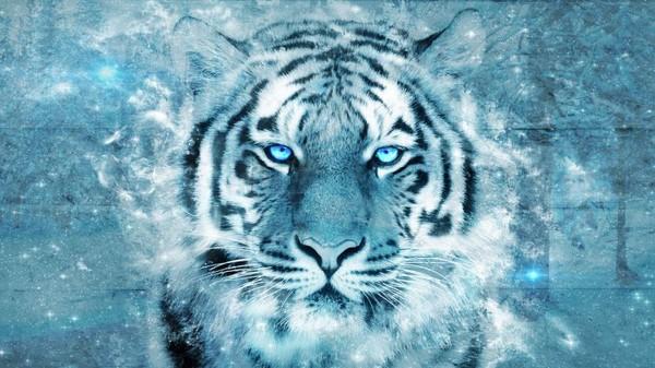 Fond ecran tigre - Image tete de tigre ...