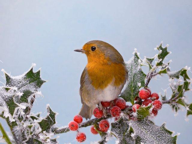 Fond ecran oiseau for Fond ecran hiver animaux